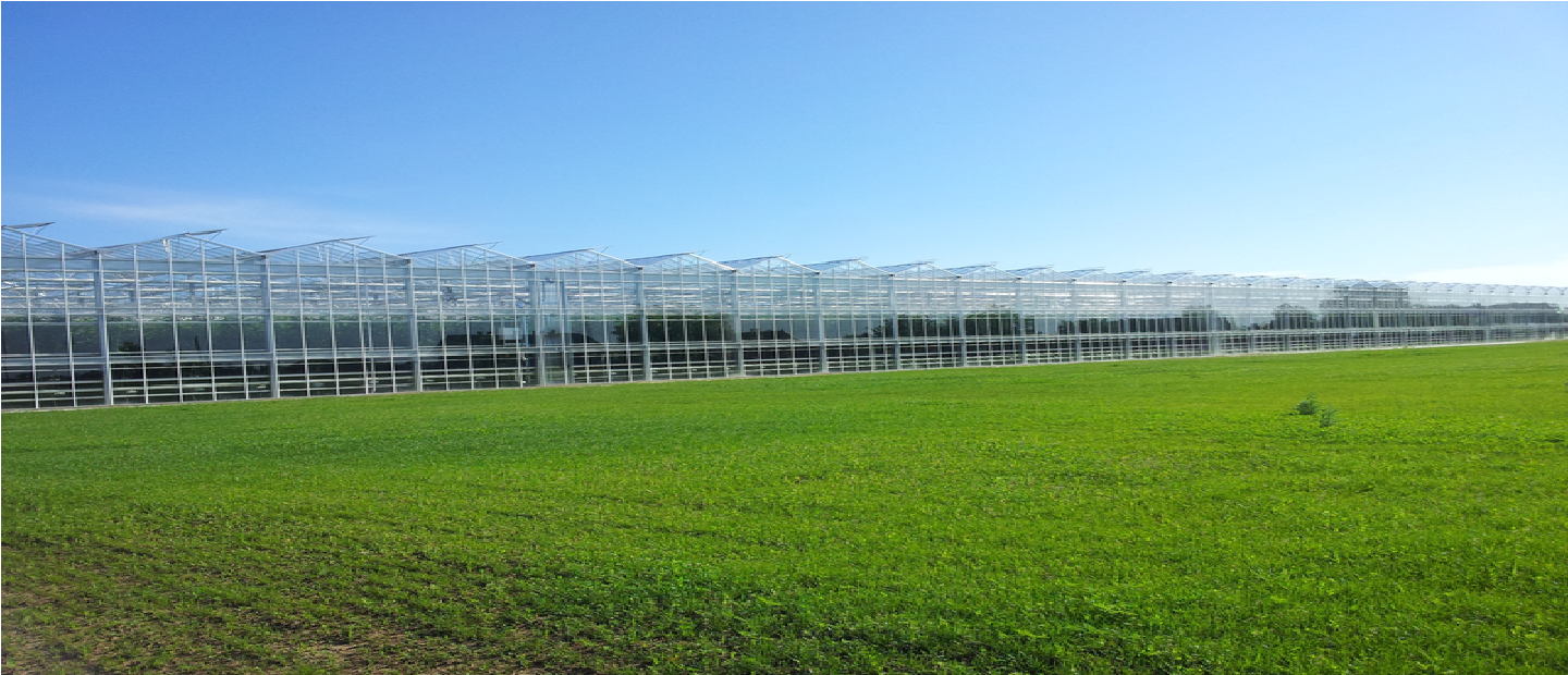 Greenhouse Irrigation Systems Nursery Watering